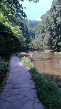粟又の滝遊歩道①.jpg